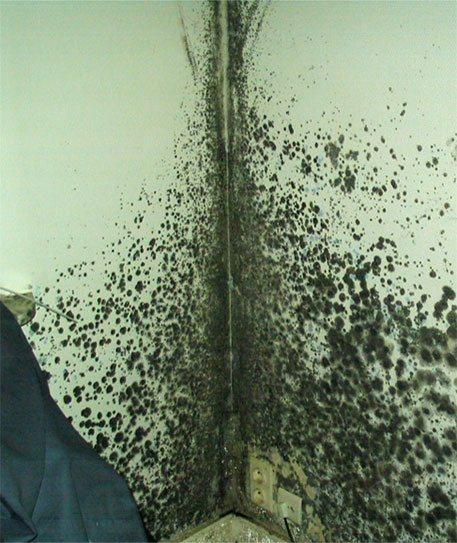 Hydrotec Traitement de la condensation et des moisissures